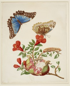 4. Pomegranate