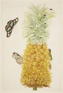 7 Pineapple