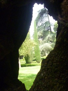 Gardens through tree